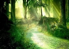 sunlit path in green forest