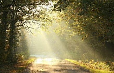 sunlight on path