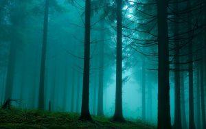 bluish fog in forest
