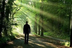 walking path in forest toward light