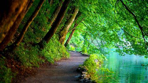 path by river and overhanging trees