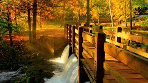 bridge over stream in Fall